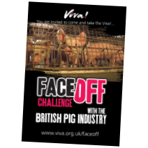 Face Off: The British Pig Industry
