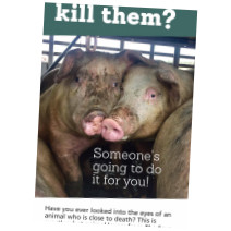 Viva! partners with The Save Movement for Pigs