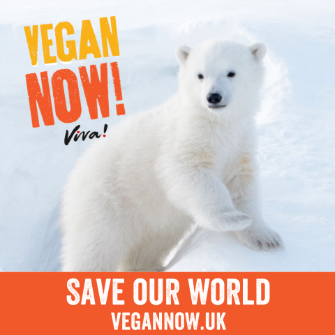 5 ways to get involved with World Vegan Day