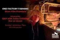 Exclusive premiere of Viva!'s new short film 'End Factory Farming'