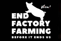 5 of the Scariest Things that Happen on Factory Farms
