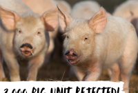 Viva Victory: Plans for a New Intensive Pig Farm Rejected
