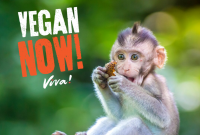 Vegan Now: Time is Running Out