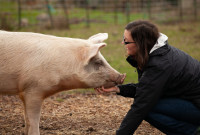 5 New Year Resolutions to Help Animals