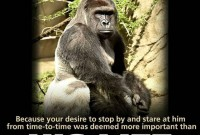 Harambe-the gorilla who paid with his life for human negligence