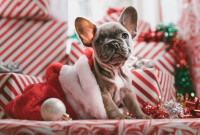4 Ways to Survive Christmas with your Family as a Vegan