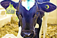 Viva!'s Scary Dairy Week of Action