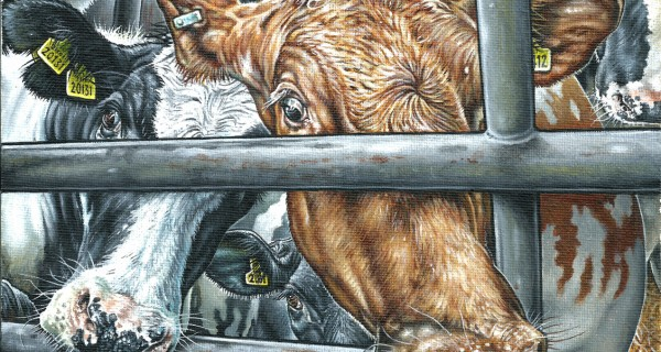 The-Dairy-Project-1-Life-Sentence-The-invisible-faces-of-dairy