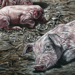 THE PIG PROJECT - No kind of life